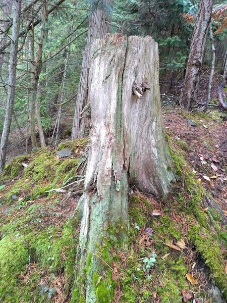 tree stump pender island